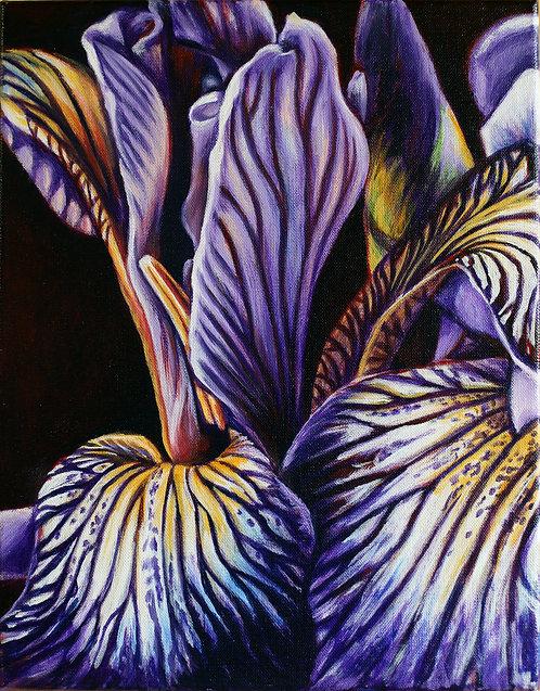 Wild Iris III by Shelley Weber