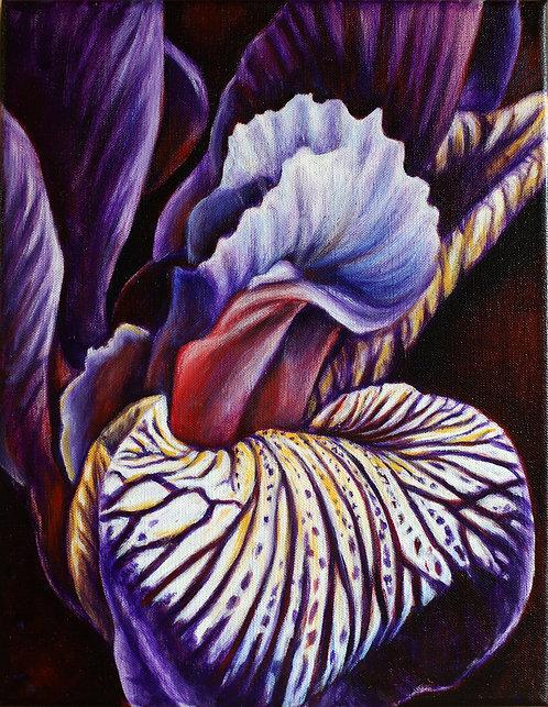 Wild Iris II by Shelley Weber