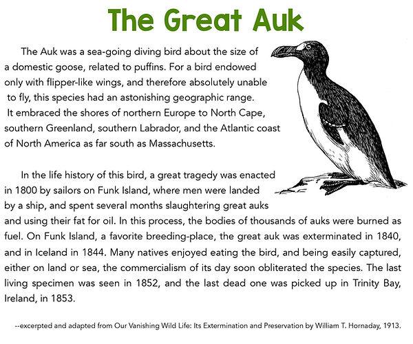 The Great Auk 3.jpg