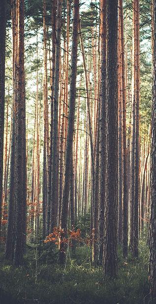 Forest_edited.jpg