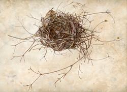 Nest: Levitation