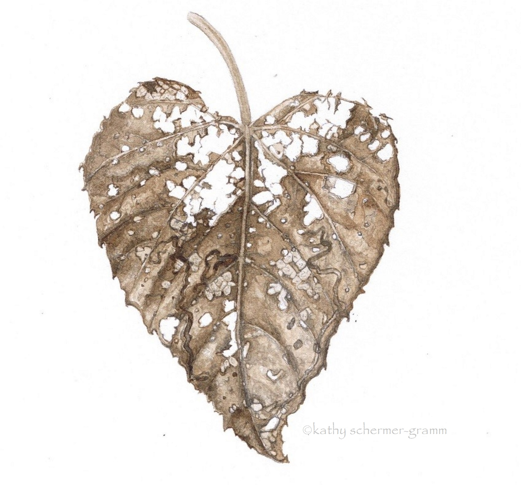 Fox Grape Leaf in Decay