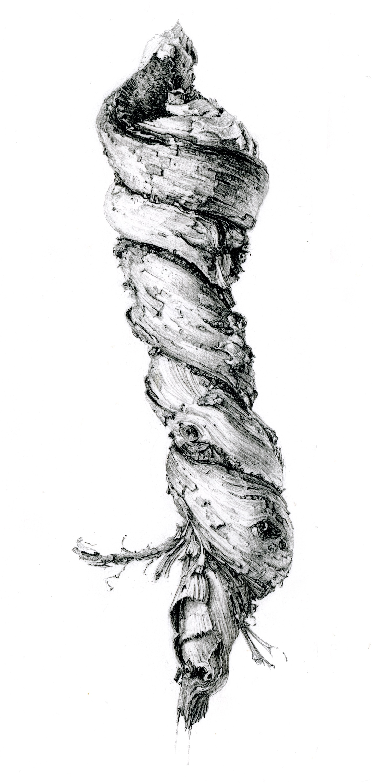 Gnarled honeysuckle vine