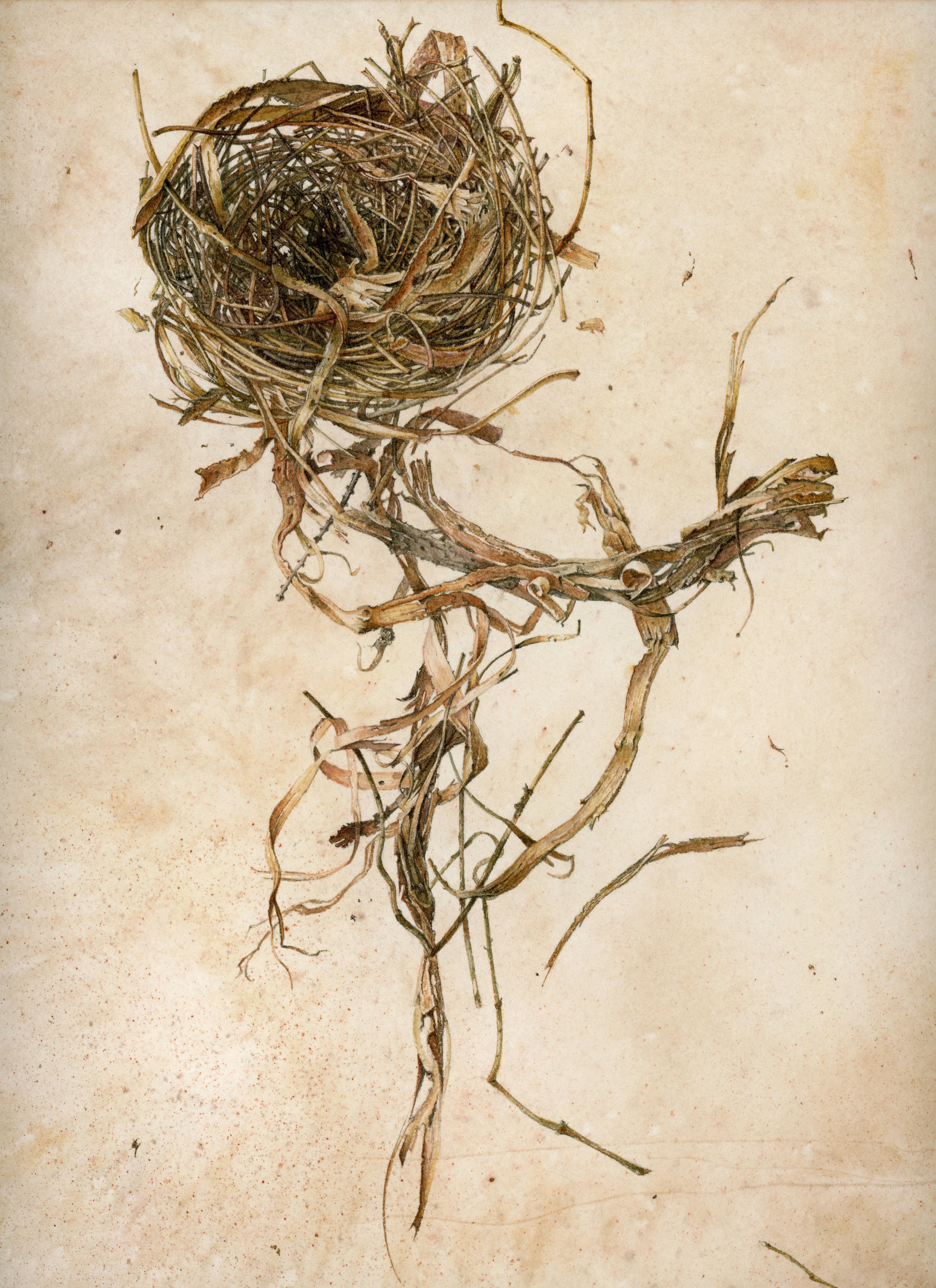 Nest: Gravity
