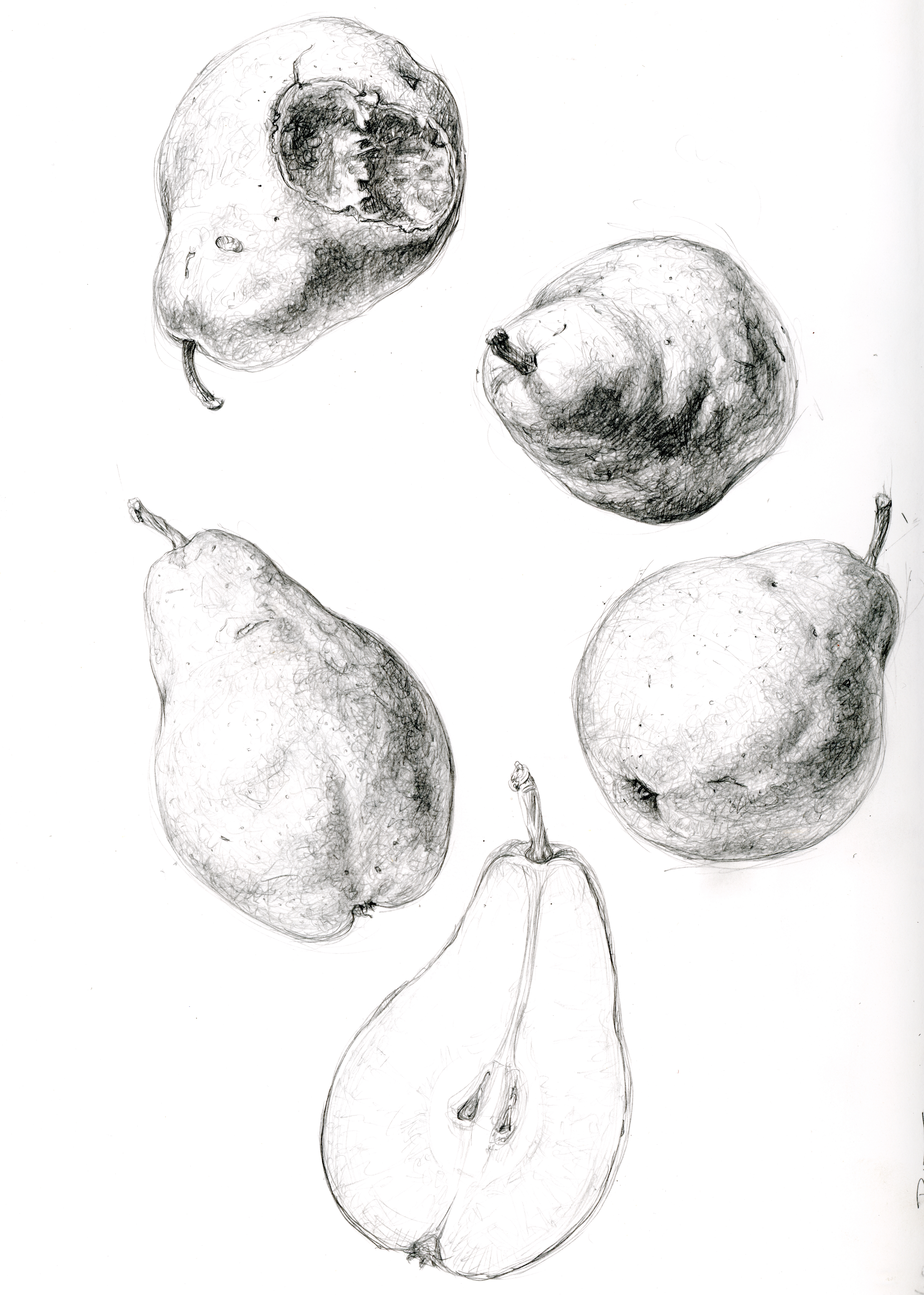 Bartlett Pear studies