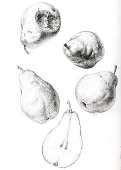 Bartlett Pear studies