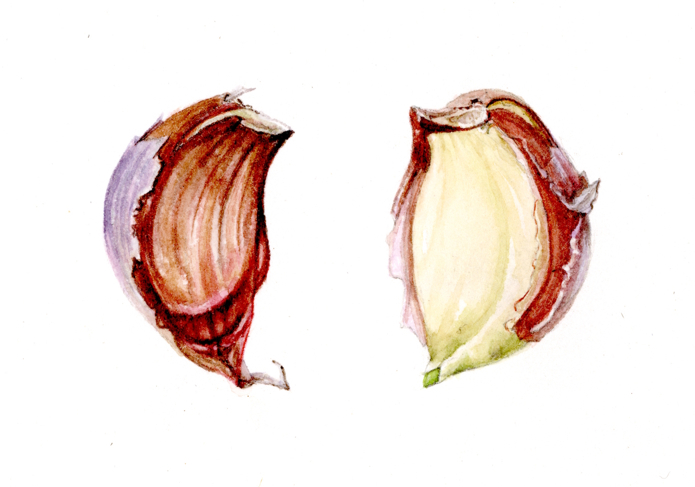 Garlic Pair