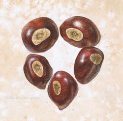 Painted Buckeye Heart