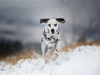 TiereW03-12-001ohne schnee.jpg