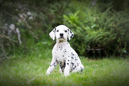 Tierfotografie aus de Südsteiermark