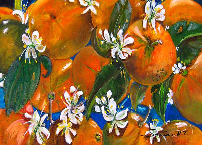 Oranges Blossoms