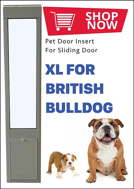 XL British Bulldog