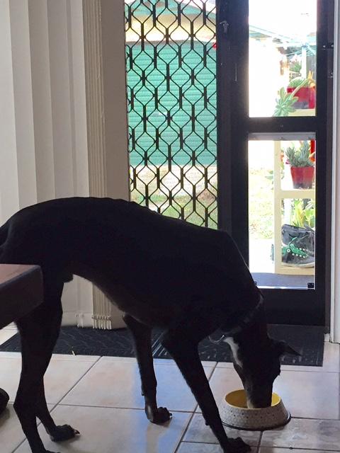 greyhound custom 75cm flap height