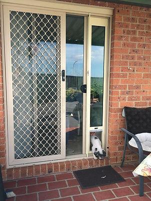 Dog Door insert for sliding door Medium Primrose with Adaptor