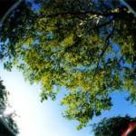 Fák és történetek