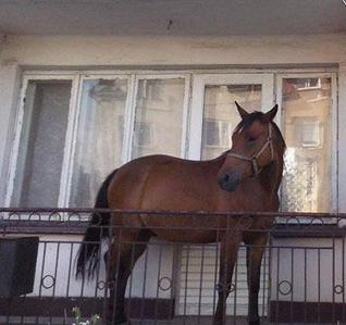 Ló az erkélyen. Vigyázz veszélyes! Nem tudtad?