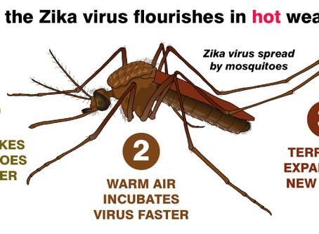 Nem fázik-zik a Zika virus