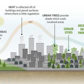Fák és a városi légszennyezettség II.