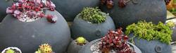 Tunnock planters