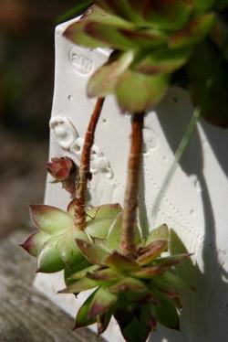 Nurture planter (detail)