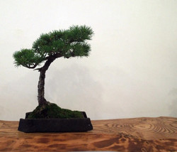 commissioned bonsai planter