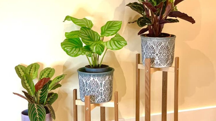 Plant Stand Set