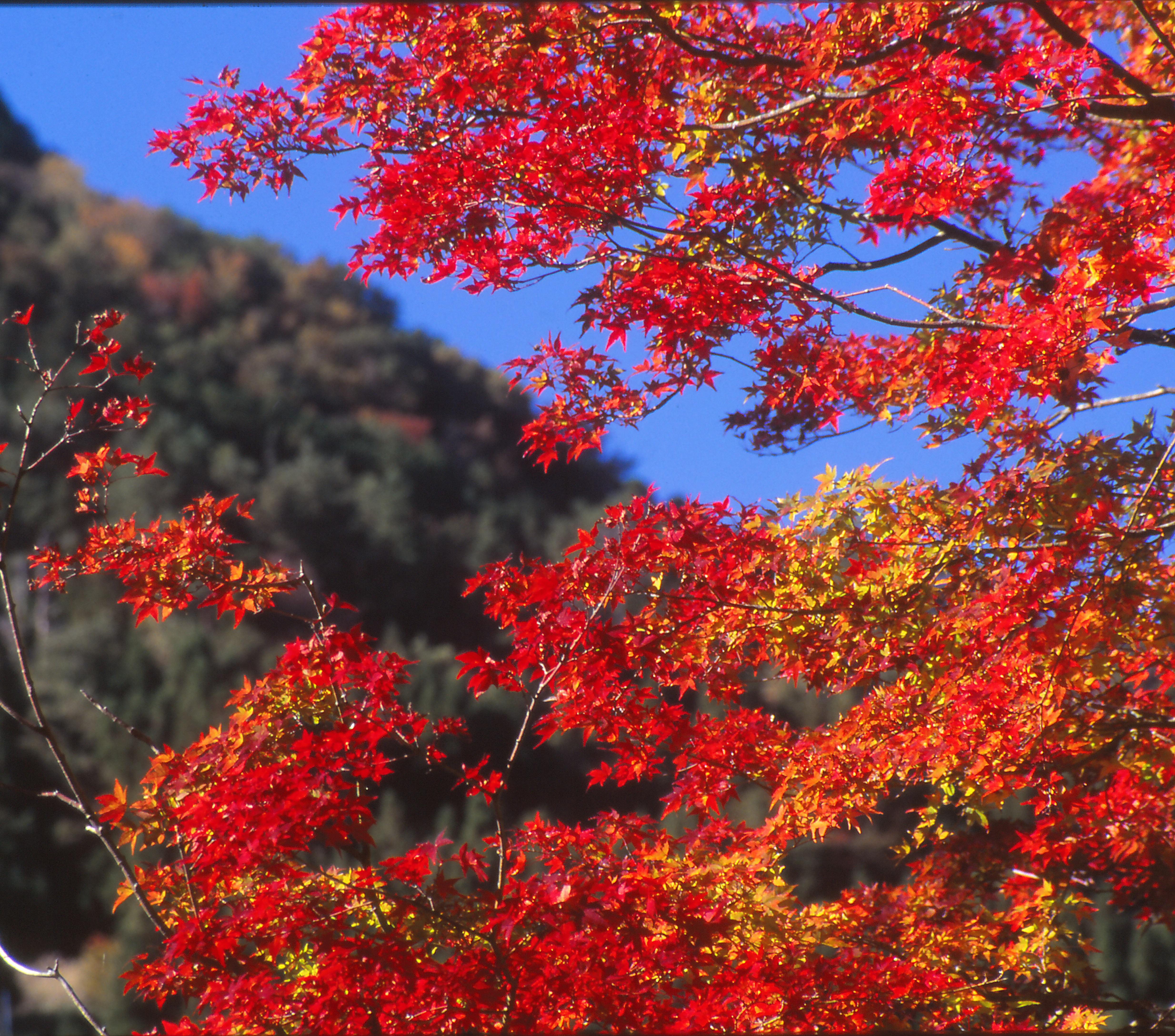 秋・山麓の紅葉