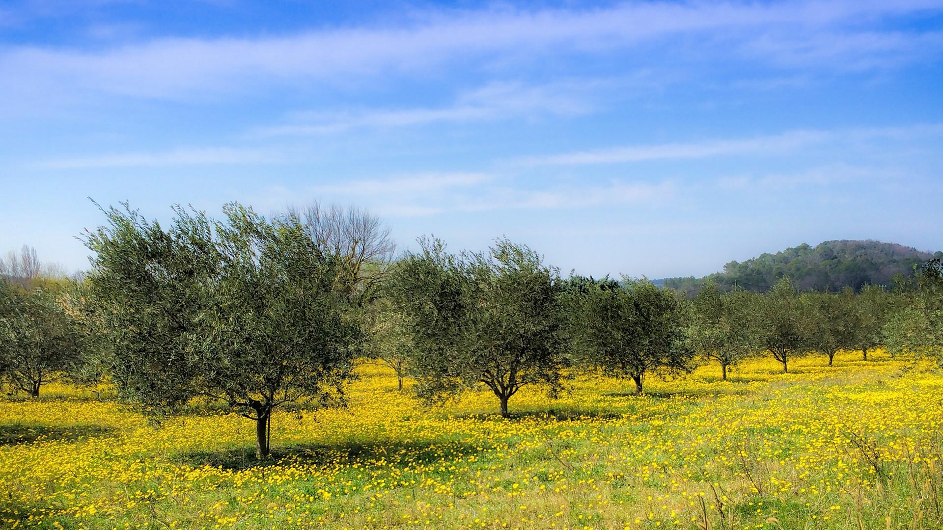 landscape-tree-nature-grass-wilderness-p