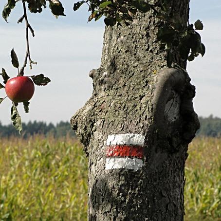 Eva tropí hlouposti