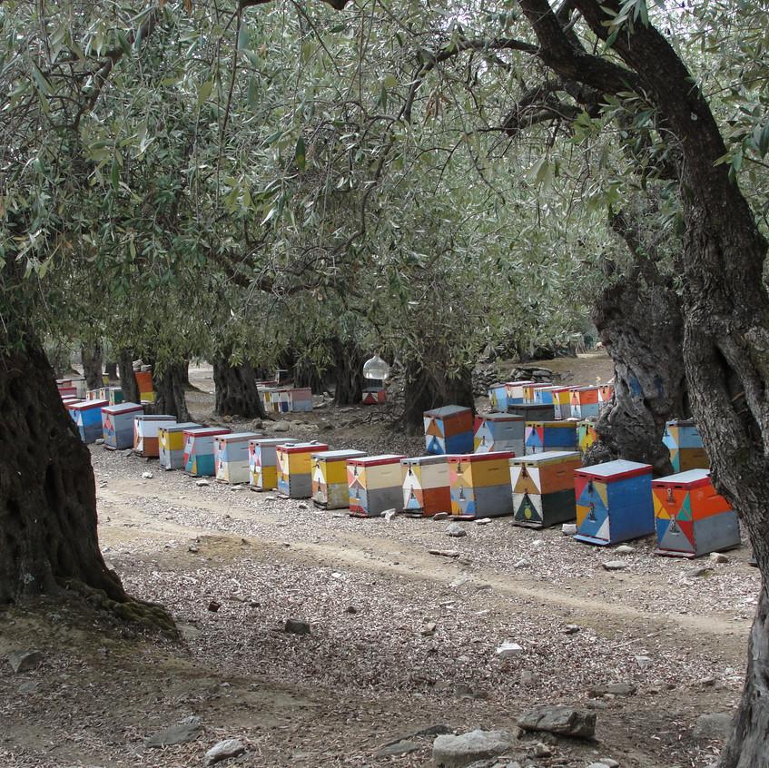 Zdejší med je vyhlášený