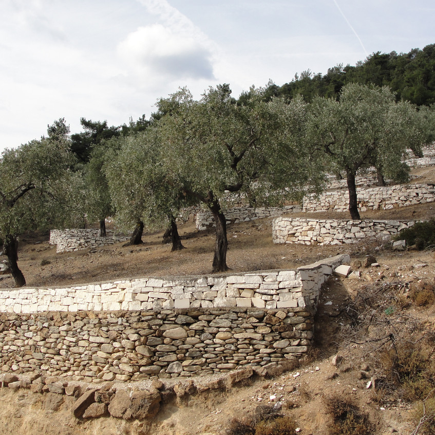 Olivové terasy