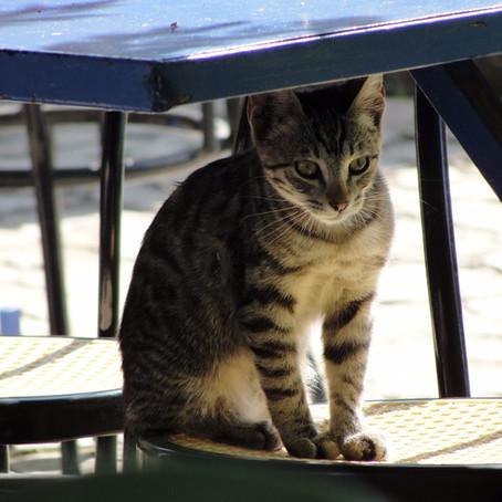 Thassos: Reportáž pro kočku