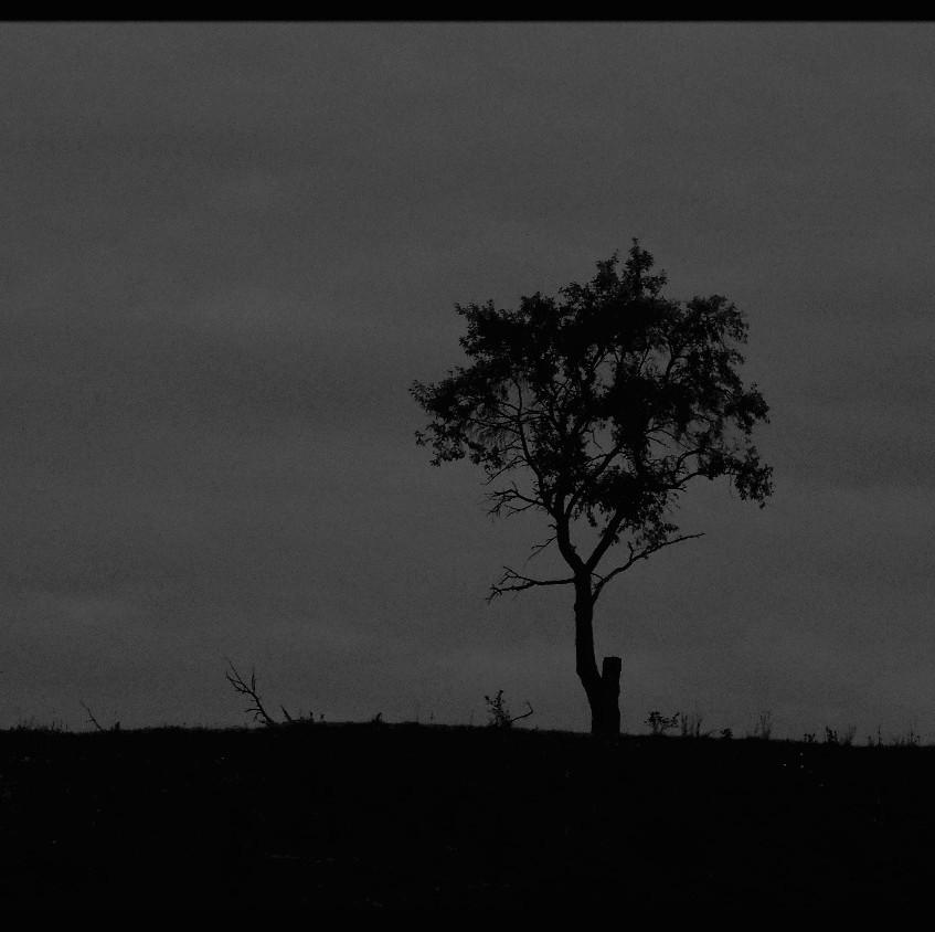 Strom na vartě