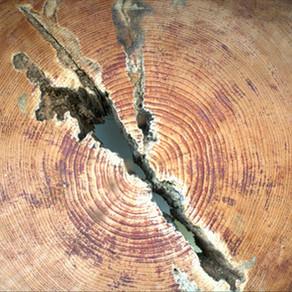 Dřevo, kam se podíváš