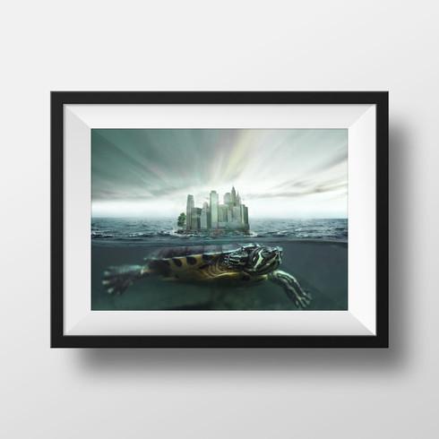 Turtle of New-York City // Photo editing & manipulation
