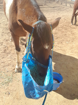 """there's alfalfa in the bag, she was stealing bites, so I """"gave"""" it to her"""