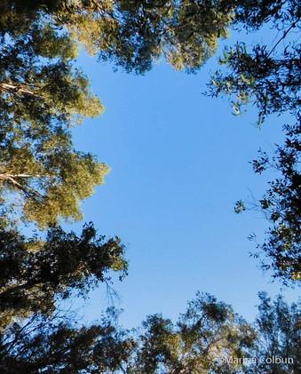 Bosque en Marina Colbún
