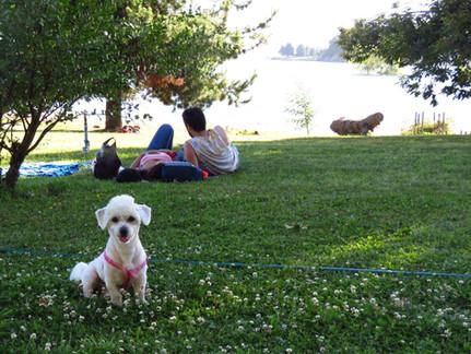 Mascotas en Marina Colbún
