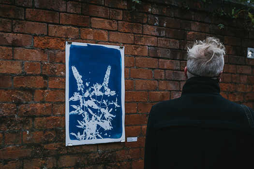 Buddleia Butterfly.  Cyanotype on Fabriano.  Jonathan Brennan  Photo Credit: Neal Campbell