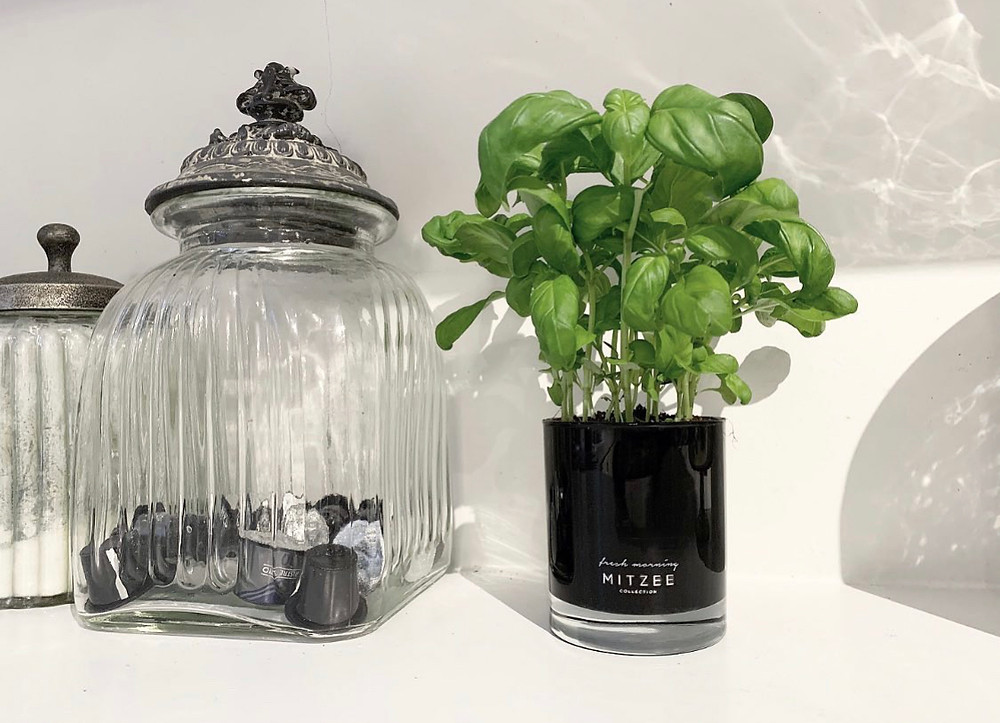 Recycled Candle | Grow your Own Herbs