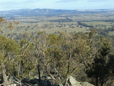 Rural Land and Activities Review - an important plan for the future of Mitchell Shire