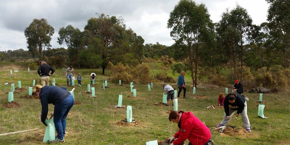 Tree Planting Day at Seymour College