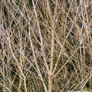 Trees-Open-3rd-John Gwyther-Thicket.jpg