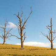 Trees-Open-HC-Sherrol Gibson-Lost the Ba