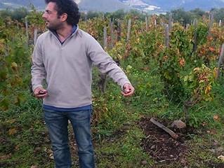 Nya viner från Etna