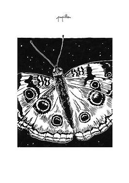 Marion Roger Papillon.jpg