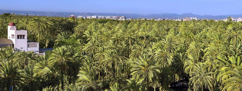 View over the Palmeral of Elche