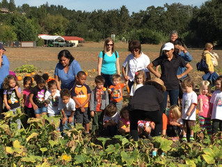 Pumpkin Patch at Manginni's Farm Pleasant hill.