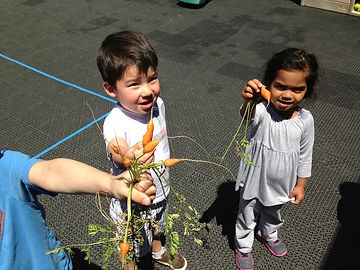kids from MSV gardening carrots