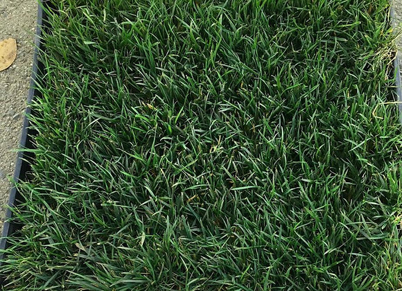 DeltaBlue Grass